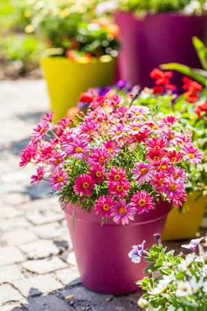 jardines con flores: Al aire libre macetas para pequeño jardín, patio o terraza