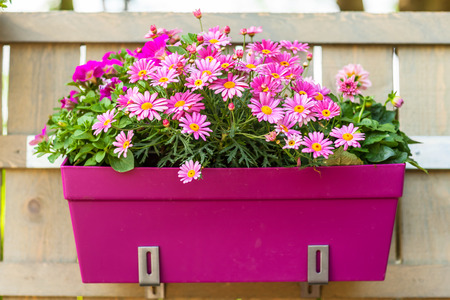 patio: Outdoor flower pot hanging on wooden fence for small garden, patio or terrace Stock Photo