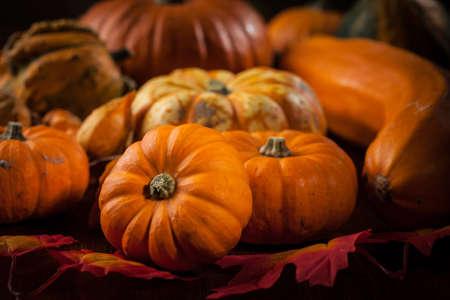 calabazas de halloween: Calabazas tradicionales para la acción de gracias y Halloween