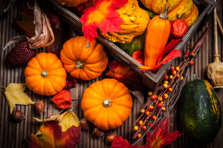 background settings: Autumn still life with pumpkins for Thanksgiving and Halloween