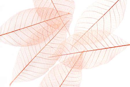 hojas secas: Seque las hojas en el fondo blanco Foto de archivo