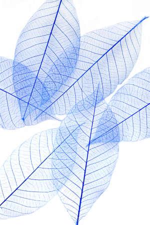 hojas secas: Hojas secas en el fondo blanco Foto de archivo