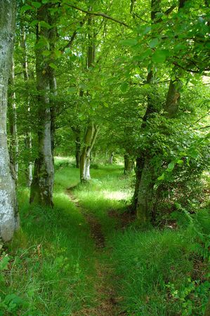 Woodland Walk Stock Photo - 407705