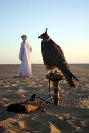 homme arabe: Un homme arabe avec ses Falcon dans le Desrert