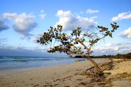 tree in a beach at the sunset, desert beach, varadero Stock Photo