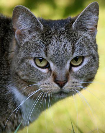 vigilance: Pusche the cat