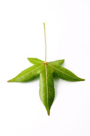 Isolated leaf Stock Photo