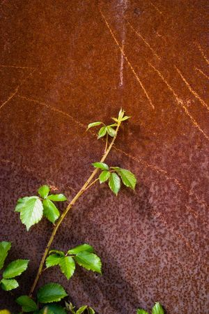 Green leave with rust red background