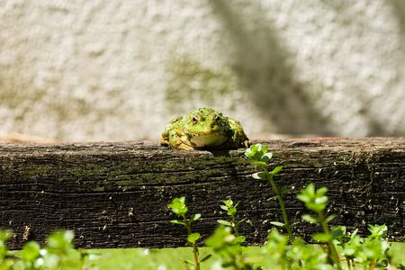 lilypad: Frog near to a lake on a trunk Stock Photo