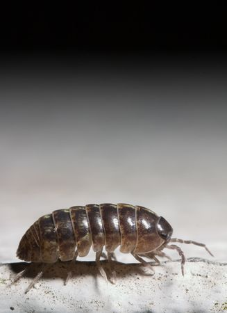 extreme macro of a bug Stock Photo