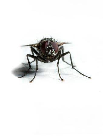 extreme macro of a housefly Stock Photo