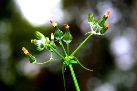 sprung: flower