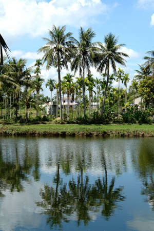 Tropical palm tree reflection photo