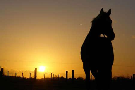 backlit: Paisaje retroiluminado de la puesta del sol del caballo