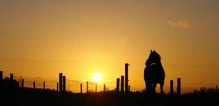 backlit: Retroiluminada caballo atardecer paisaje