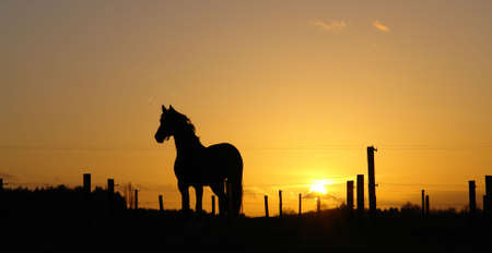 Backlit horse sunset landscape Stock Photo - 710259