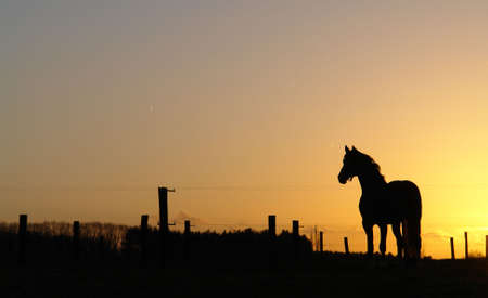 Backlit horse sunset landscape Stock Photo - 710255