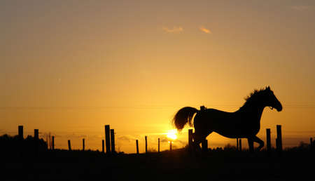 Backlit horse sunset landscape photo
