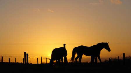 Backlit horse sunset landscape