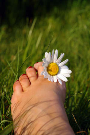 Summer feeling concept displaying a foot with a daisy between the toes Stock Photo - 910177