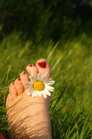 Summer feeling concept displaying a foot with a daisy between the toes Stock Photo - 910179