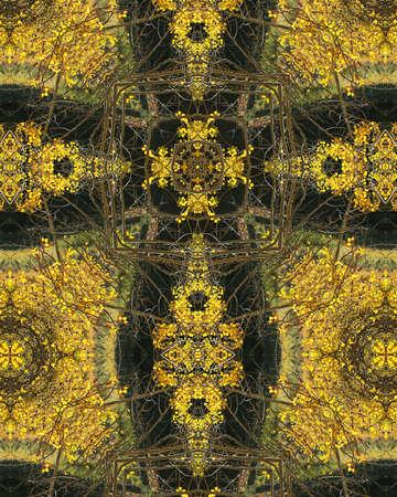crux: kaleidoscope cross: autumn aspens in Colorado