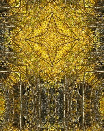 kaleidoscope cross:  autumn aspens in Colorado photo