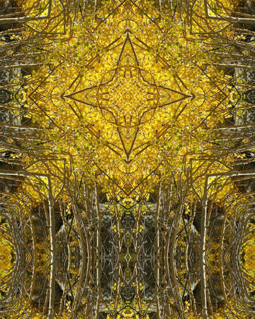 kaleidoscope cross:  autumn aspens in Colorado photo