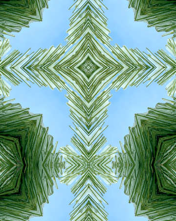 kaleidoscope cross:  ice layer on pine needles 4 photo
