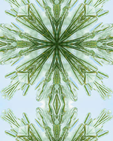 kaleidoscope cross:  ice layer on pine needles 3 photo