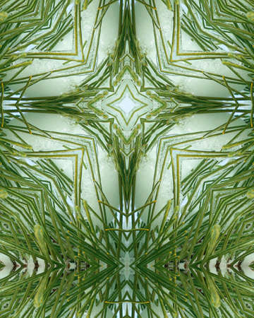 kaleidoscope cross:  ice layer on pine needles photo