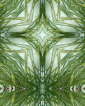 crux: kaleidoscope cross:  ice layer on pine needles