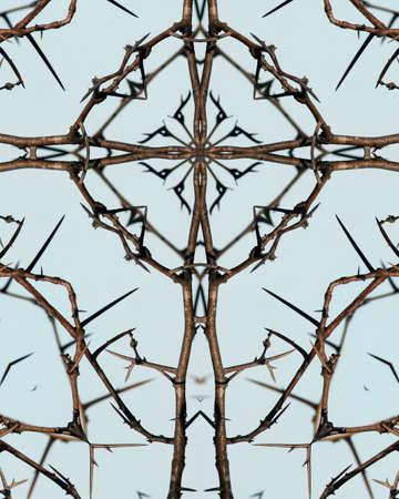 thorny: kaleidoscope cross: thorns on thorny locust tree Stock Photo