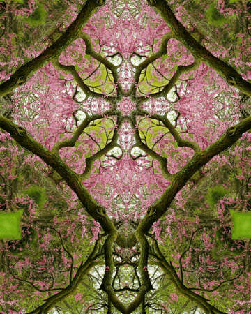 redbud tree: kaleidoscope cross: redbud tree, spring Stock Photo