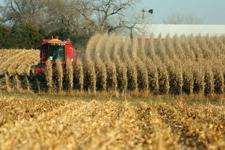 corn stalk: combine harvesting field of corn, rural Nebraska Stock Photo