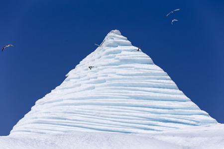 frigid: iceberg peak, seabirds, St  Anthony, Newfoundland, Canada