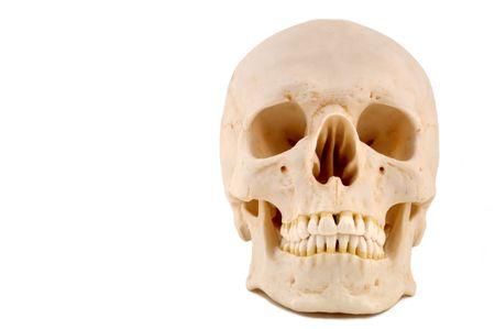 anatomically: Skull 1-(12MP camera), anatomically correct medical model of the human skull.