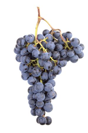 A real Pinot Noir grape cluster picked fresh (with permission) from a winery. 12MP camera.