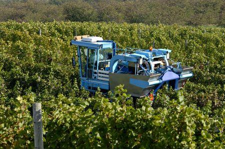 A mechanical grape harvesting machine in a vineyard. Focus = machine. 12MP camera. Stock Photo