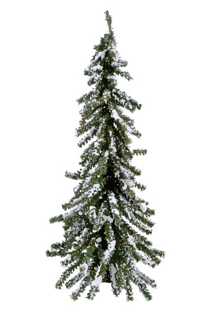 woody: vector Christmas Tree with snow. Illustration