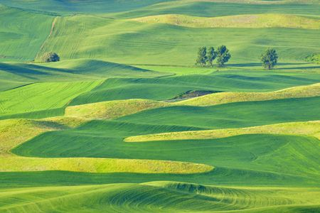 palouse: Beautiful rolling hills and patterns in the grain fields of the Palouse in Washington state, early summer.  Different green shades are from the different crops of barley, wheat, and lentils. Stock Photo