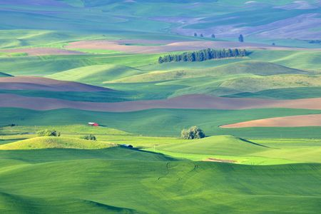 Red barn in early morning light in the rolling hills and grain fields of the Palouse in Washington state, early summer.  Different green shades are from the different crops of barley, wheat, and lentils. Stock Photo - 7469907