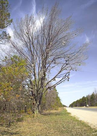 sandal tree: Un famoso gran �rbol de zapatos est� junto a EE.UU. 131, justo al norte de Kalkaska, Michigan. (C�mara de 14MP)