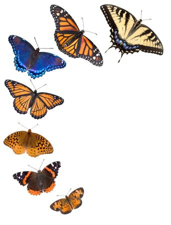 Seven different kinds of butterflies are arranged on a white background to make a border. From bottom to top are northern crescent, painted lady,fritillary,viceroy,red-spotted purple,monarch,and tiger swallowtail butterflies.