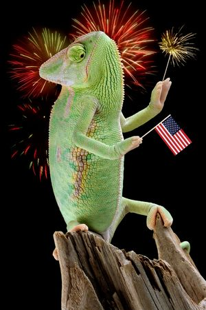 A veiled chameleon is holding a flag and a sparkler while fireworks are on display.