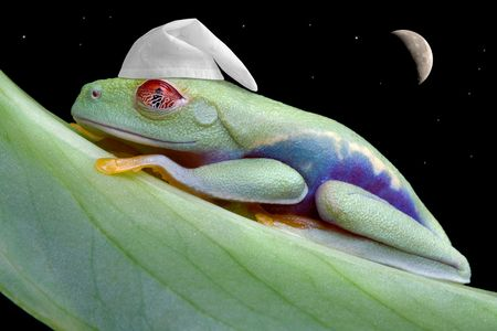 A re-eyed tree frog is sleeping wearing a night bonnet under the moon and stars.