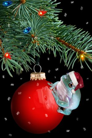 christmas frog: A whites tree frog is sitting on a christmas ornament under the tree.