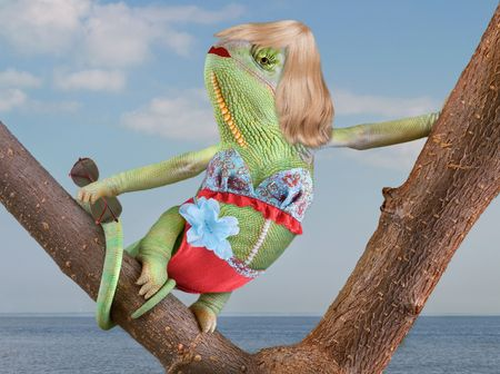 A veiled chameleon is sunning herself near a beach wearing a bikini. Stock Photo