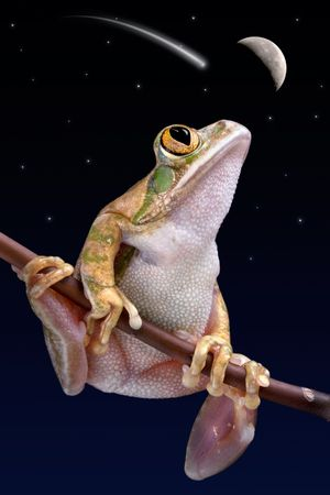 A big-eyed tree frog is watching a shooting star. photo