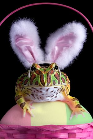 horned frog: A baby ornate horned frog is siiting on an easter egg in an easter basket wearing bunny ears.